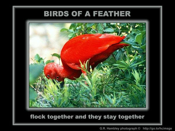 grh-inspirations-ibis-ibis-onsite
